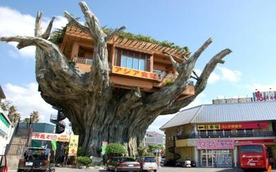 Дом-офис на дереве